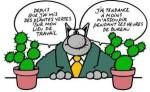 medium_Les_sucettes_a_l_anis_Cactus.jpg